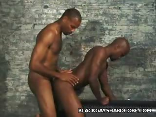 Porno Video of Beefy Gays Getting Nasty